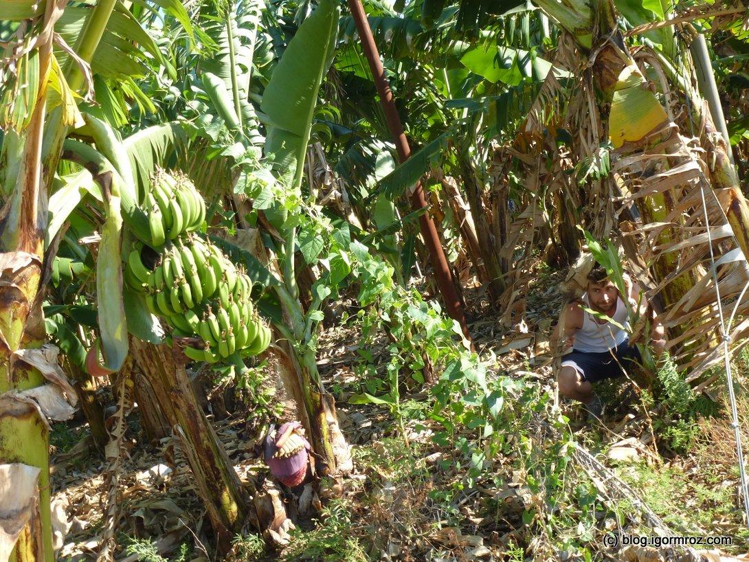 Ale zawsze możesz okraść plantacje bananów (tutaj ukrywam się przed wrogim kommando z Delty Mekongu)