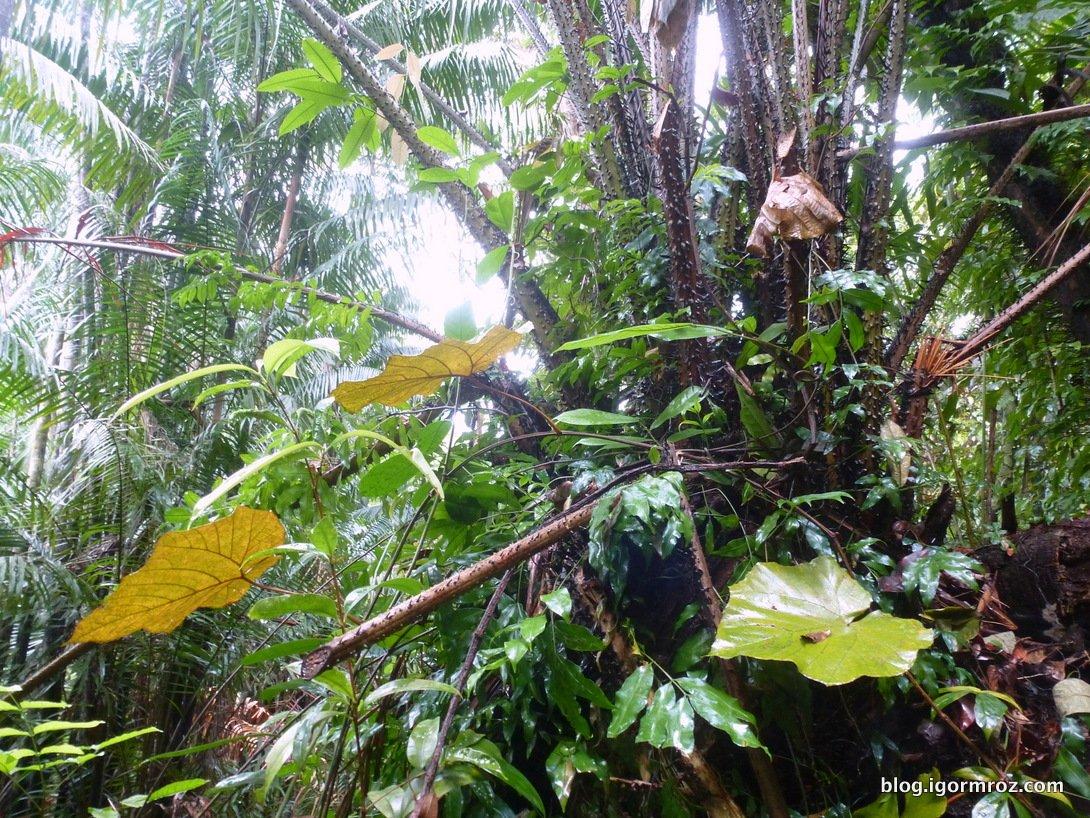 Dżunga na Borneo