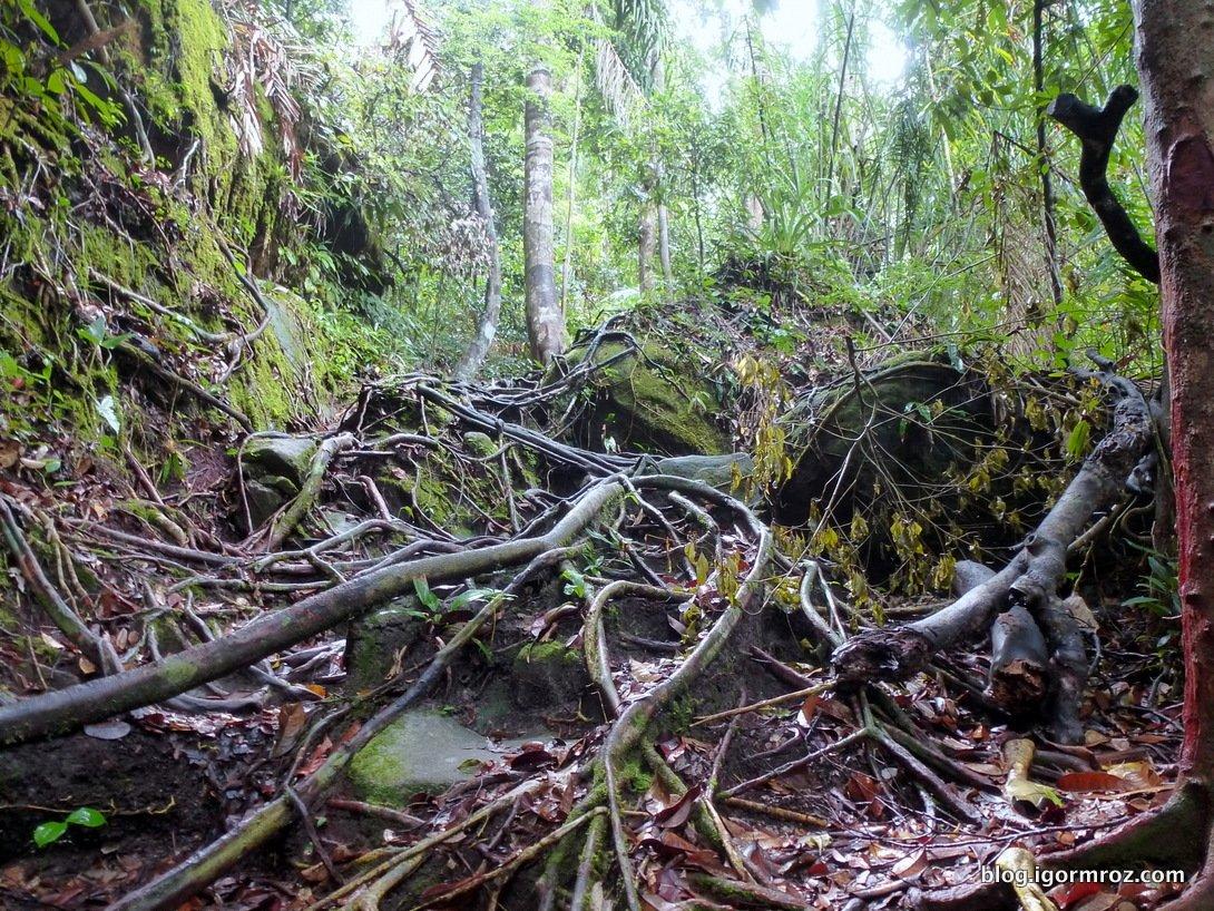 Dżungla daje do myślenia z ocenianiem innych