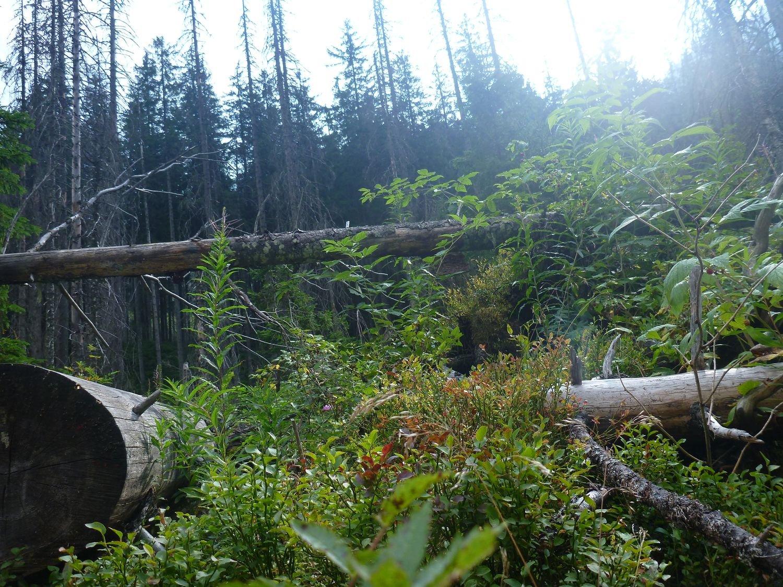 Widoki w Tatrach