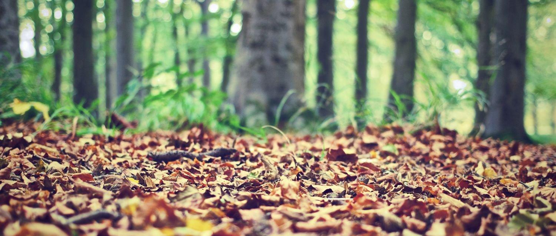 jesien to fajna pora roku